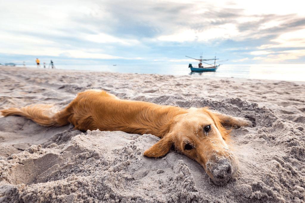 Agriturismo Maremma Toscana Cani e Animali Domestici ammessi
